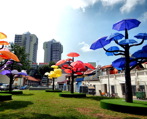 Umbrella Trees, 7 off beat places to visit in Singapore