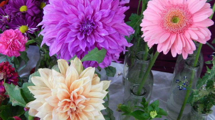 7 Reasons why Flowers make for the perfect gift for every occasion