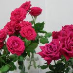 8 of the most romantic flowers and their significance