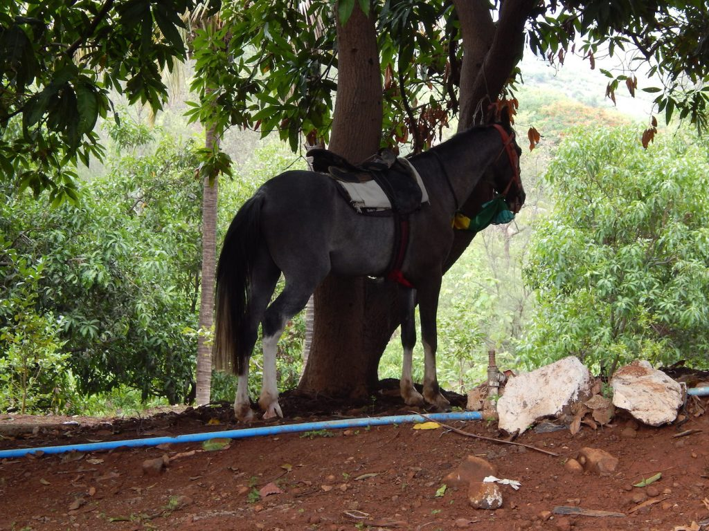 Horse riding, horse riding Karjat, Attari Farm, Camping in Karjat, Karjat Farm stay, weekend getaway, horses