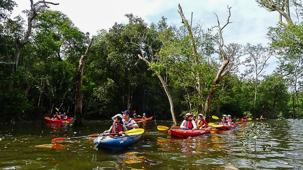 Mandai Mangroves in Singapore