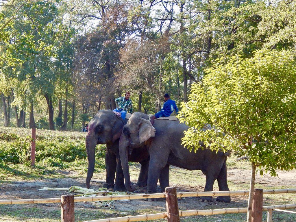 Elephants at Manas National Park