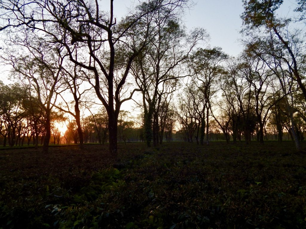 Sunset at Manas National Park